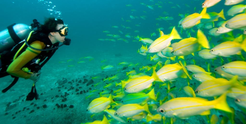 Experience The Joy Of Unlimited Shore Diving