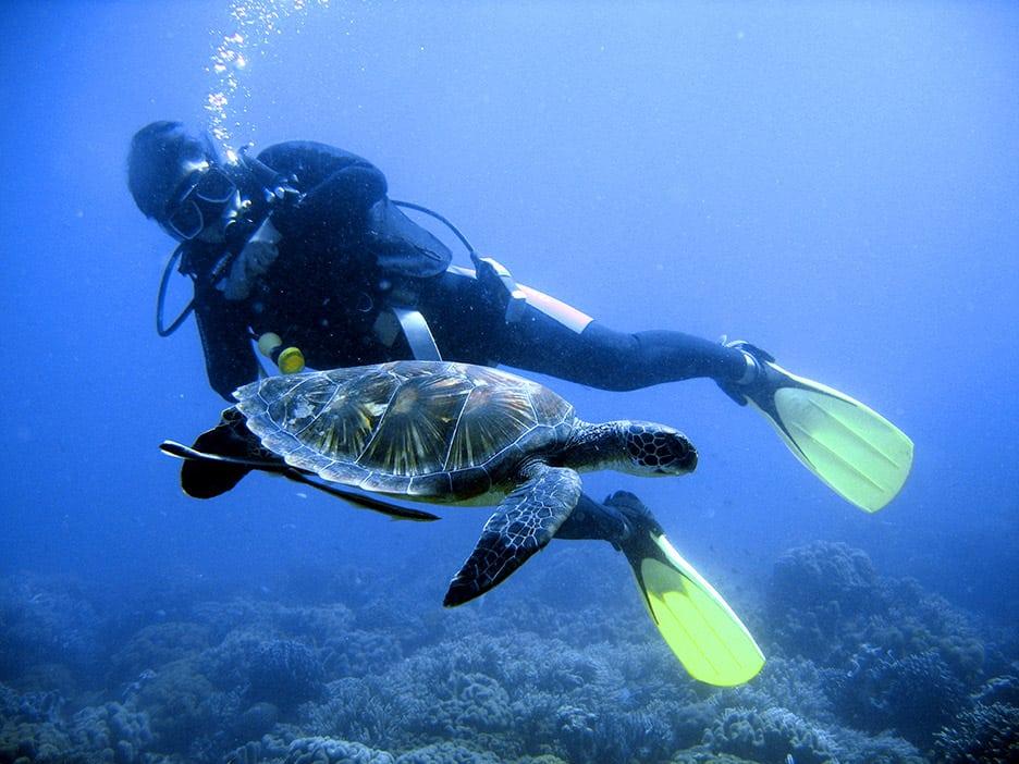 b_diver2