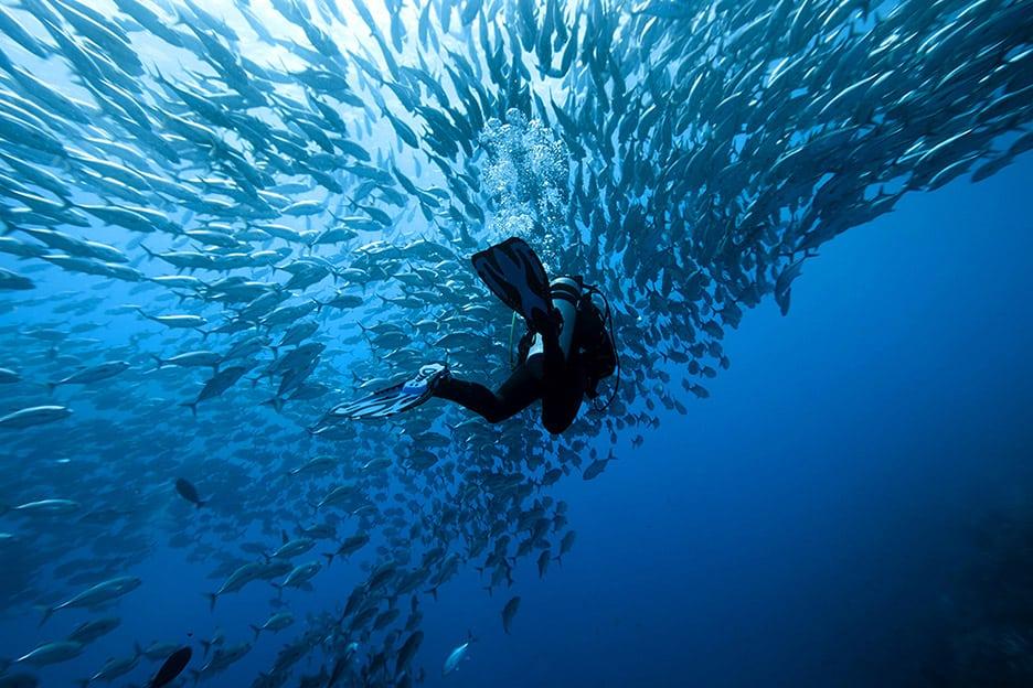 b_diver3